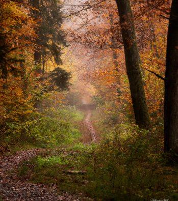 Wald Pfad